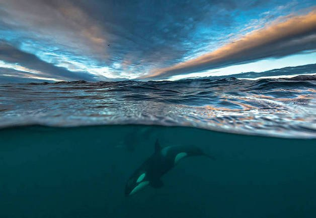 audun-rikardsen-whales10-22