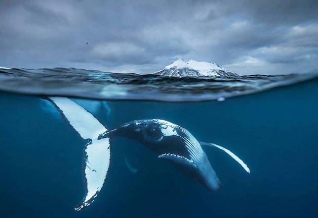 audun-rikardsen-whales11-1
