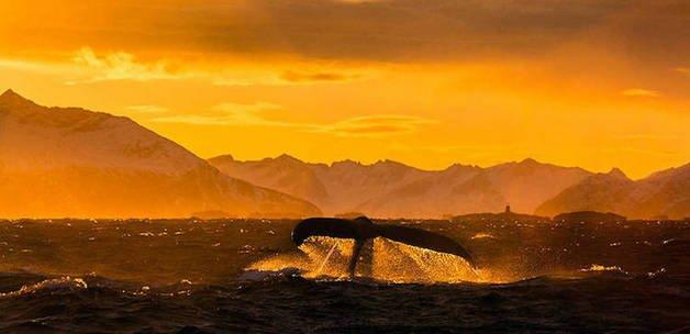 audun-rikardsen-whales2-435