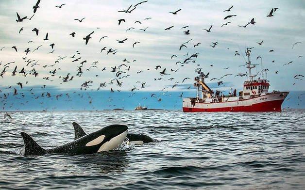 audun-rikardsen-whales3-52