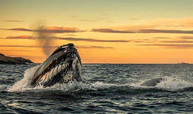 audun-rikardsen-whales4-533