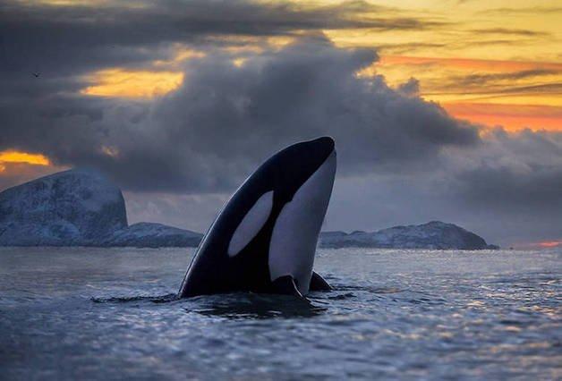 audun-rikardsen-whales5-10