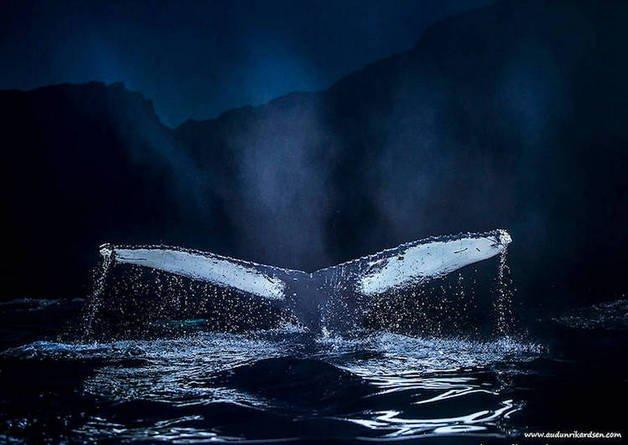 audun-rikardsen-whales7-37