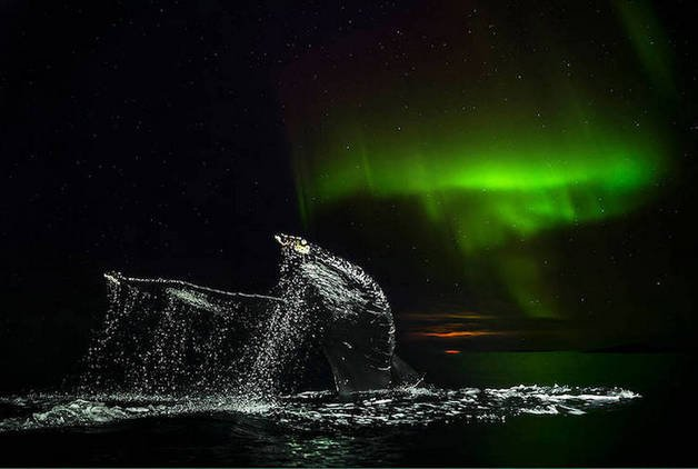 audun-rikardsen-whales8-03