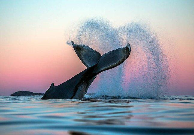 Fotógrafo capta imagens mágicas de baleias no Ártico