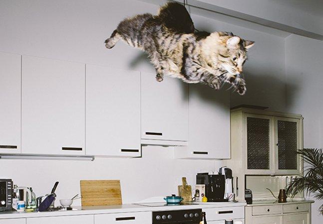 Ele fotografa gatíneos no meio de seus impressionantes vôos; não, pera