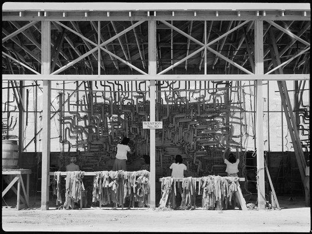 Manzanar Relocation Center, Manzanar, California. Making camoufl