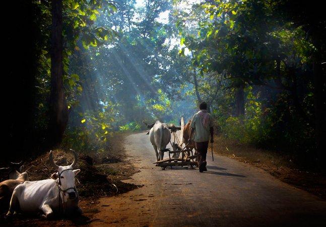 As cores estonteantes e a natureza deslumbrante da vida simples nos vilarejos da Índia