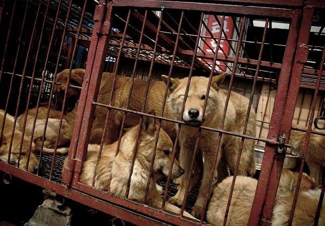 Debate: mercado de carne de cachorro responsável por 33% do comércio na Coreia do Sul vai ser fechado