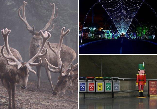 Descubra o significado destes símbolos natalinos e os lugares  onde encontrá-los pelo Brasil