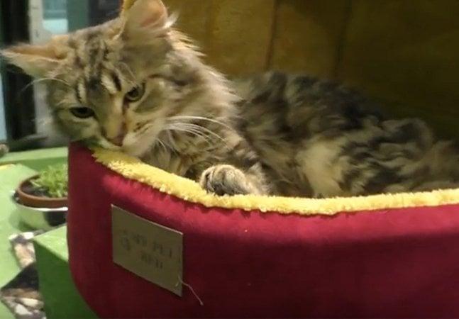 Animais de abrigo experimentam uma cama pela primeira vez e o resultado é emocionante