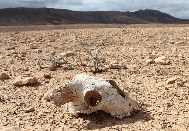 O que é a '6ª extinção em massa' e por que já passou da hora de nos preocuparmos (e muito!)