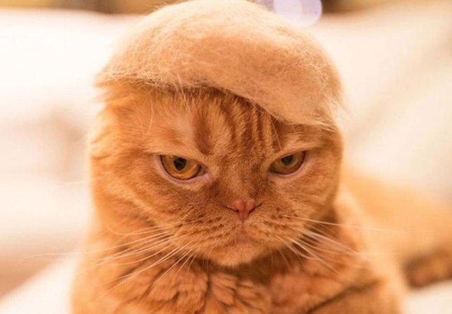 Nova extensão do Chrome troca imagens de Donald Trump por gatíneos