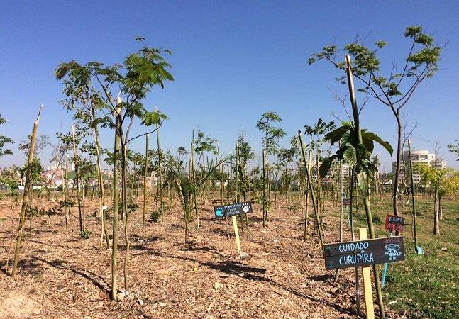 Floresta de Bolso em SP tem plantio coletivo para celebrar a passagem de ano
