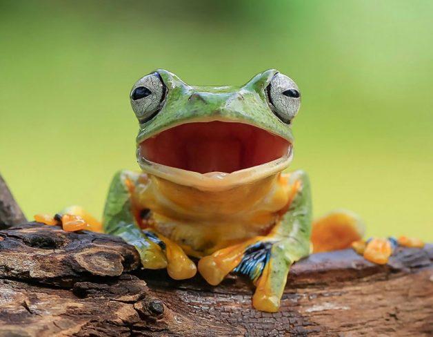 frog-photography-tantoyensen-1-5836fb5d51096__880