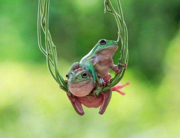 frog-photography-tantoyensen-11-5836fb76c6bac__880