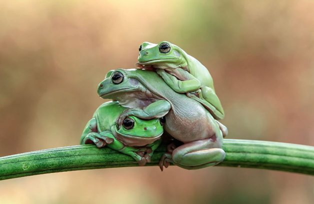 frog-photography-tantoyensen-17-5836fb86c8e9f__880