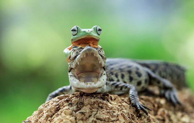 frog-photography-tantoyensen-19-5836fb8bd229e__880