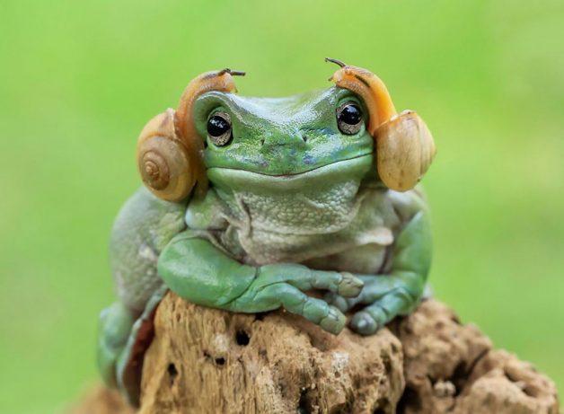frog-photography-tantoyensen-2-5836fb5fa3383__880
