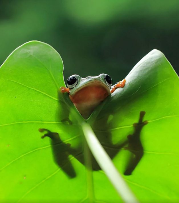 frog-photography-tantoyensen-21-5836fb8ff0438__880