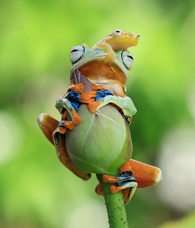 frog-photography-tantoyensen-23-5836fb95f20bb__880