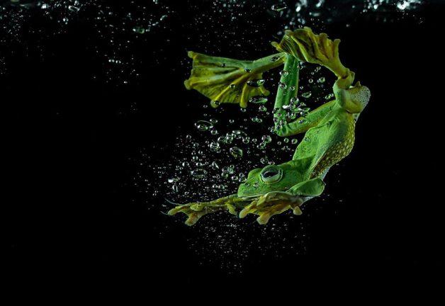 frog-photography-tantoyensen-27-5836fb9ec5094__880