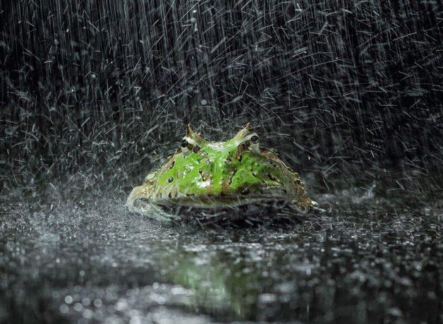 frog-photography-tantoyensen-29-5836fba7285c4__880