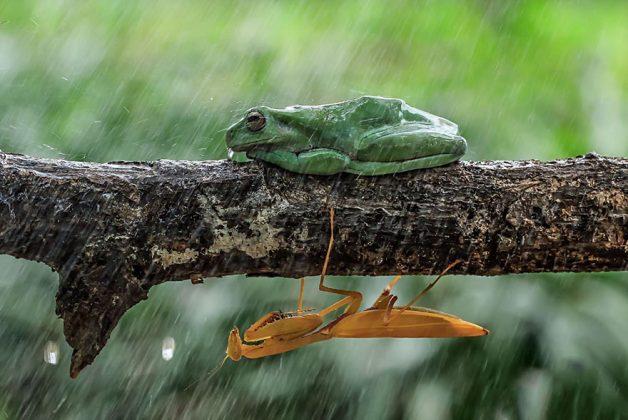 frog-photography-tantoyensen-31-5836fbac2d4bc__880