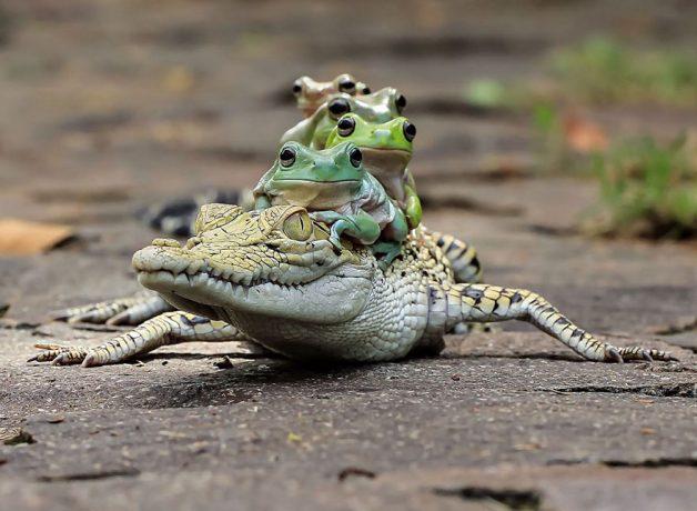 frog-photography-tantoyensen-38-5836fbbdeb971__880