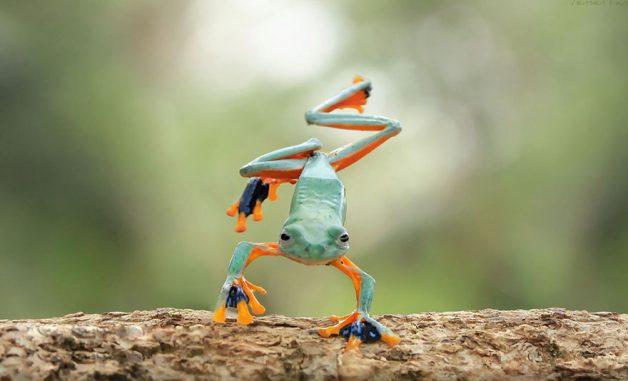 frog-photography-tantoyensen-7-5836fb69c27e4__880