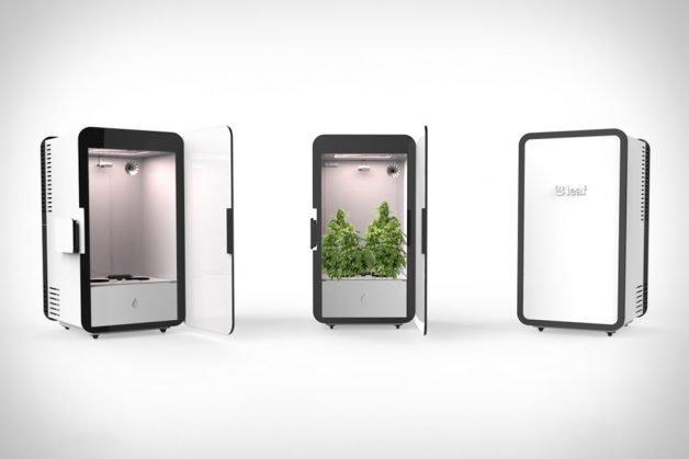 leaf-cannabis-system