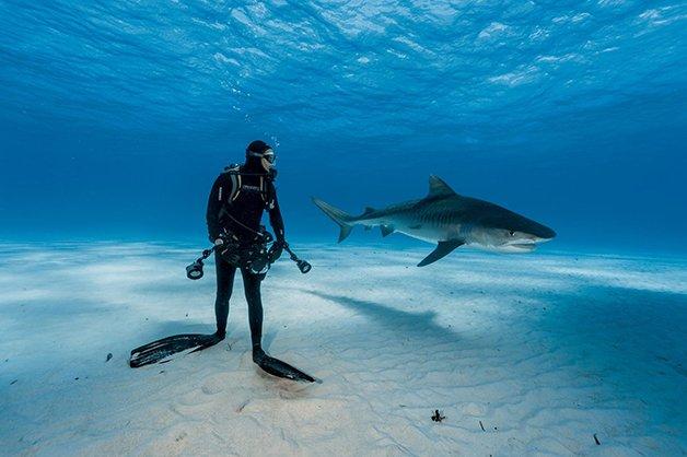 tiger-shark-adapt-1900-1