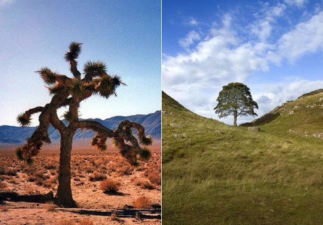 Conheça as árvores que ficaram famosas em filmes, livros e lendas pelo mundo