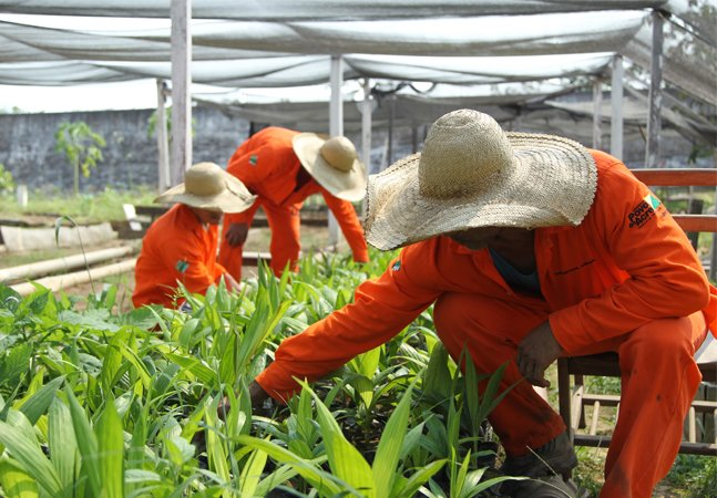 Em presídio no Acre, curso oferece diploma em horticultura orgânica para os detentos