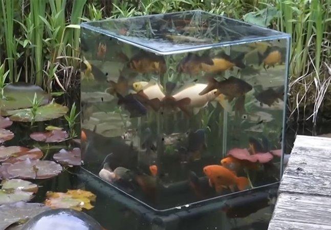 O incrível aquário invertido onde os peixes não ficam 'enjaulados'