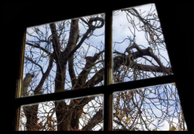 A árvore vista do sotão