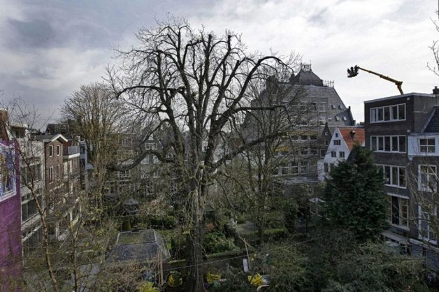 edit_anne-frank-tree2