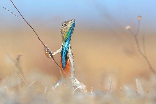 edit_warrior-of-the-grassland-anup-deodhar