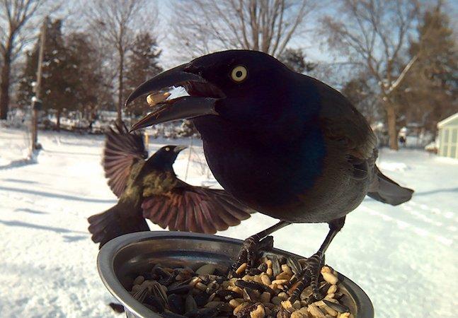 Mulher instala cabine de foto em comedouro e capta retratos maravilhosos de pássaros