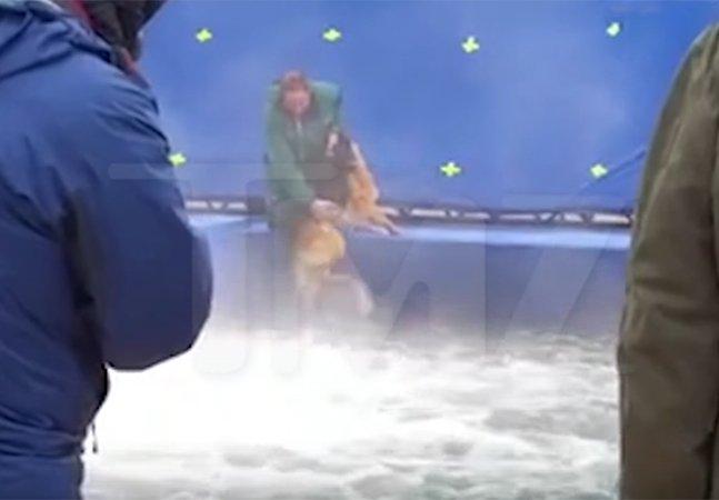 PETA convoca boicote ao filme 'Quatro Vidas de um Cachorro' após vídeo de maus tratos em gravações