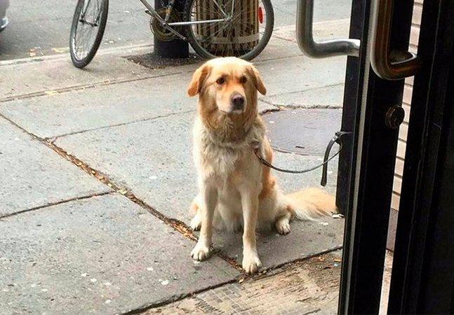 Página homenageia a lealdade de cachorros ao fotografá-los esperando por seus donos na porta de lojas