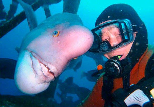 A improvável amizade entre um mergulhador e um peixe que dura há 25 anos