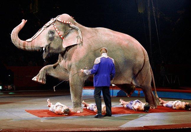 Chega de crueldade: Em Santa Catarina, nova lei proíbe circos de utilizar animais em espetáculos