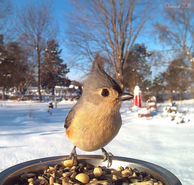 lisa-m-ca-bird-photobooth-4
