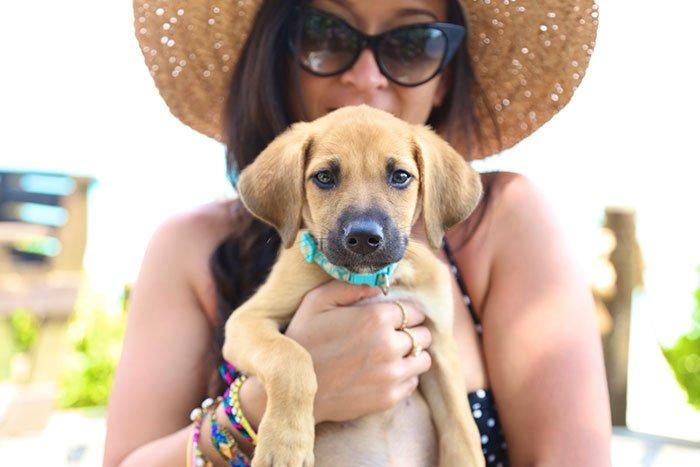 rescue-dog-island-potcake-place-turks-and-caicos-18
