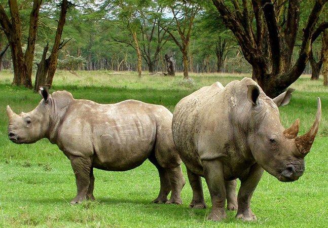 Neste parque os guardas atiram em pessoas para proteger rinocerontes