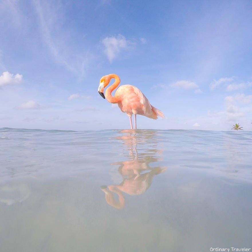 This-Beach-in-Aruba-is-Full-of-Friendly-Pink-Flamingos-57b2afb4383ca__880