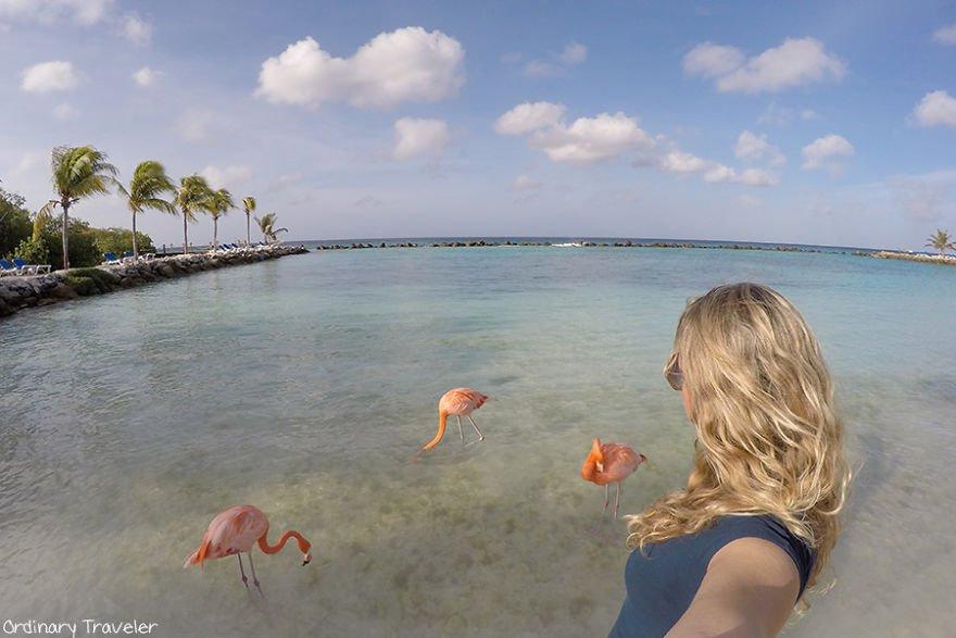 This-Beach-in-Aruba-is-Full-of-Friendly-Pink-Flamingos-57b2afbd1f54c__880