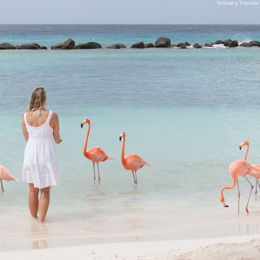 This-Beach-in-Aruba-is-Full-of-Friendly-Pink-Flamingos-57b2afbee6a88__880
