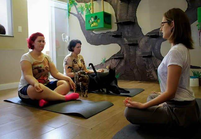Neste 'cat café' em Sorocaba você pode fazer yoga com gatos